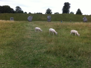 Sheep contentedly munching near the stones