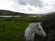 Horse and lough down the road.