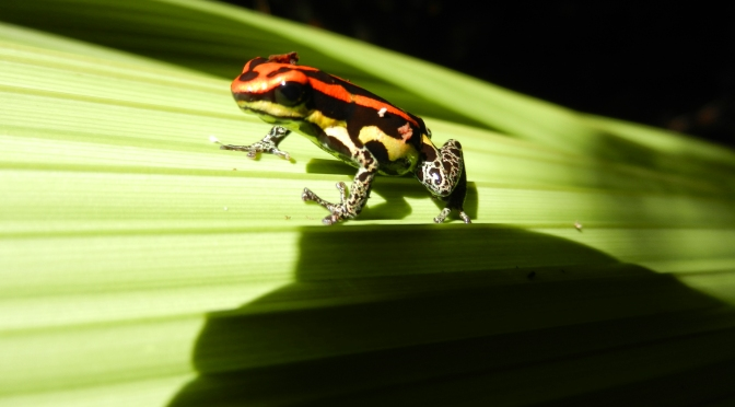 The Valley of the Poison-Dart Frogs