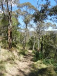 More descent to Jenolan.