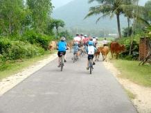 Cow traffic jam.