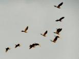 Birds over Angkor Wat.