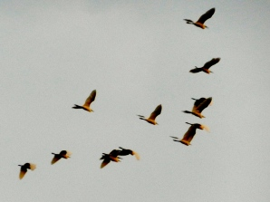 Birds over Angkor Wat.