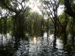 Drowned forest on Tonle Sap.