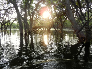 Sun going down in the drowned forest.